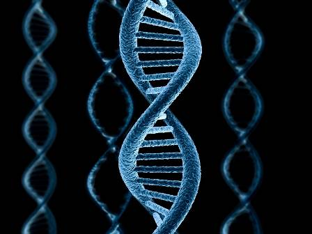 Genetika 4loveka