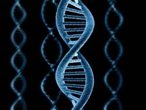 genetika 4loveka.jpg